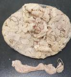 Schweinekrause Kaliber 48 52 abgebunden mit Schlaufe 27cm